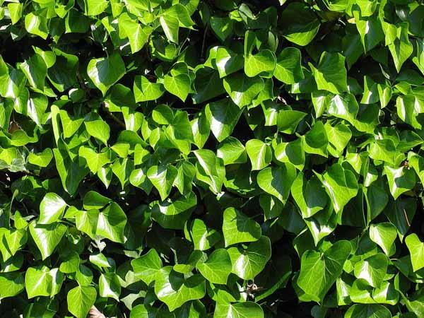 Il verde fuori e dentro casa - Piante verdi da esterno ...